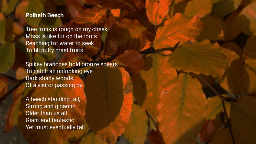 Poetry Polbeth Beech.png